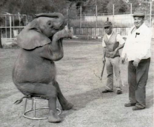 ele circus sitting 2