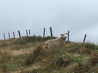Happy Sheepy